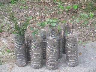 Plantation d'une mini-forêt de 600 arbres en Bretagne et mode d'emploi pour se lancer.. Dl1069?display&x=320&y=240