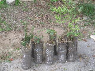 Plantation d'une mini-forêt de 600 arbres en Bretagne et mode d'emploi pour se lancer.. Dl1070?display&x=320&y=240