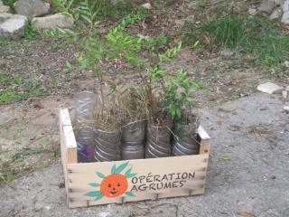 Plantation d'une mini-forêt de 600 arbres en Bretagne et mode d'emploi pour se lancer.. Dl1071?display&x=320&y=240