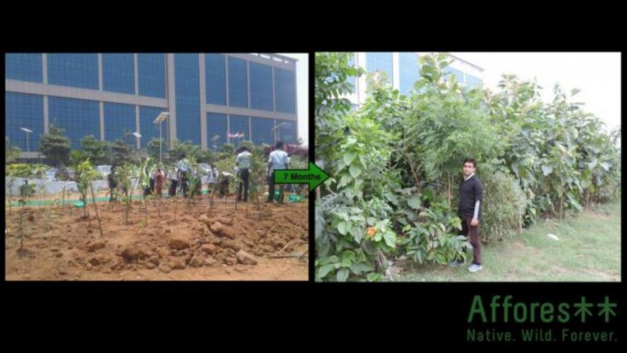 Before And After Me Infront Of One Of My 7 Monhts Old Forest Planted At A Corporate Campus In City Center Location Chennai India