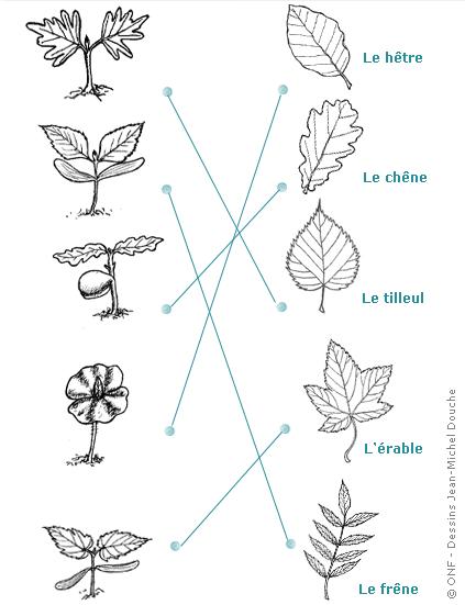 Plantation d'une mini-forêt de 600 arbres en Bretagne et mode d'emploi pour se lancer.. Tiki-download_wiki_attachment